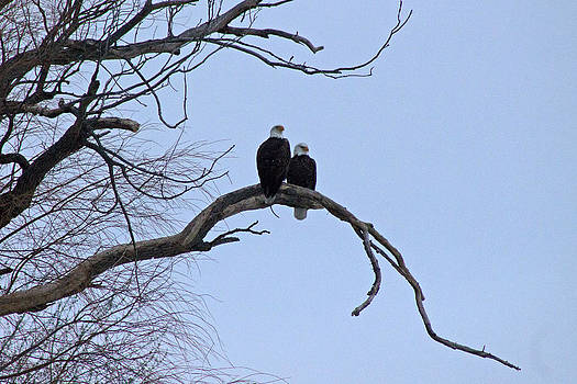 A Majestic Pair by Rhonda Humphreys