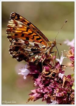 A marvelous butterfly by Elizabeth  Dallet