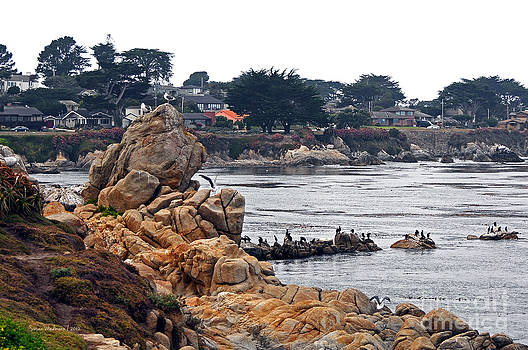 Susan Wiedmann - A Misty Day at Pacific Grove