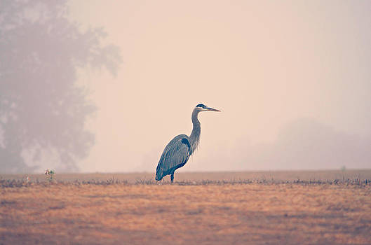 A Misty Morning by Brooke Clark