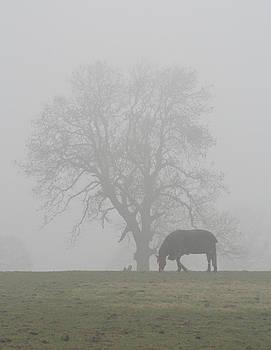 A Misty Morning by Derek Sherwin