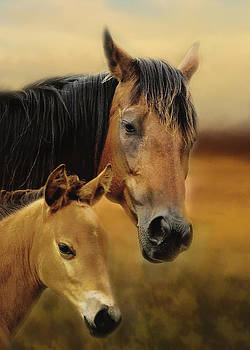 A Mother's Love by TnBackroadsPhotos