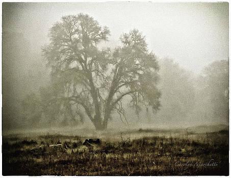 A Old Oak On A Foggy Day  by Carolyn Marchetti