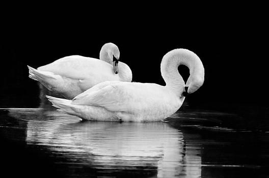 A Pair by Craig Szymanski