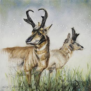 A Pair Of Pronghorns by Virgil Stephens