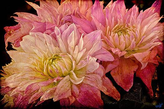 Chris Lord - A Pastel Bouquet