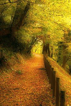 A path well chosen by Tim Ernst