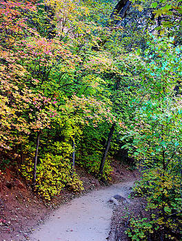 A Pathway into Fall   vert by Bill Zielinski