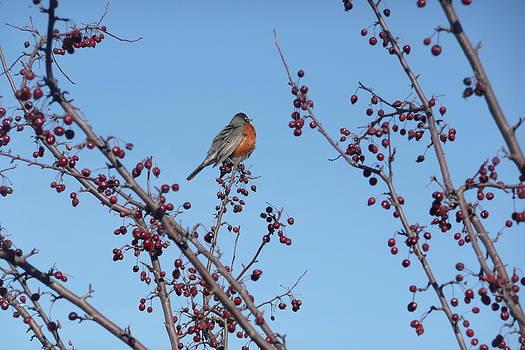 A Peek At Spring by Barb Montanye Meseroll