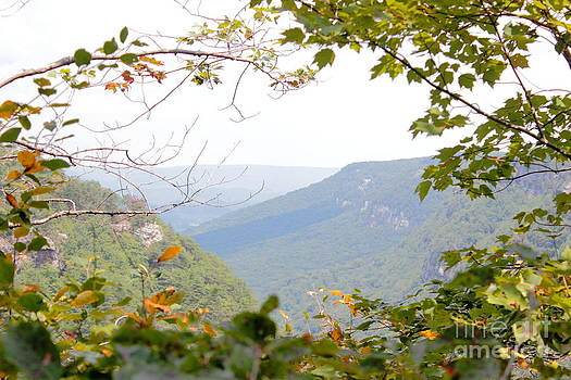 A Peek into Cloudland Canyon by Andre Turner