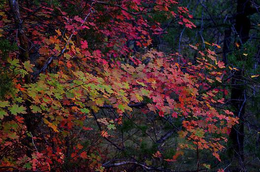A Piece of Fall by Bill Zielinski