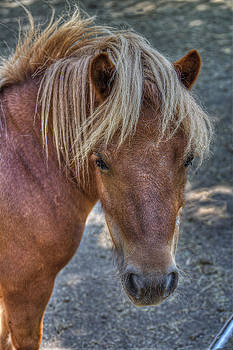 A Pony by Leonardo Marangi