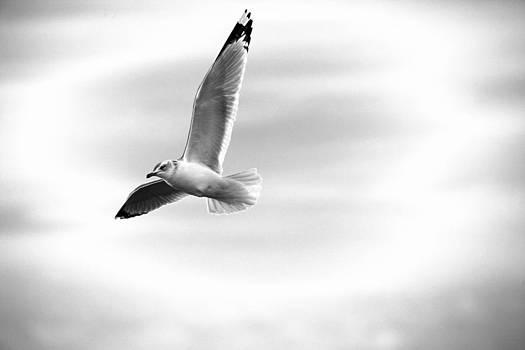 Karol Livote - A Quiet Flight