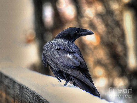 A Raven in Winter by Skye Ryan-Evans