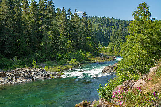 A River Runs Through It by Denise Bird