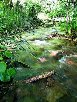 A River Runs Through by Lisa Chorny