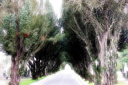 A road to nowhere by Arnold Nagadowski