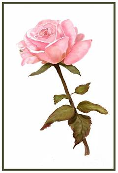 A Rose for My Love by Joan A Hamilton