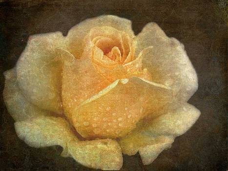 A Rose Is A Rose Is A Rose by Irma BACKELANT GALLERIES