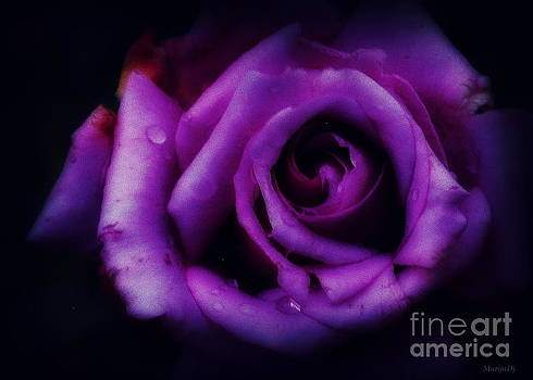 A rose by Marija Djedovic