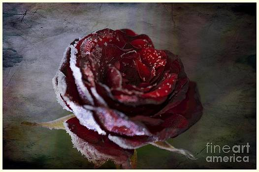 A Rose by Nicole Markmann Nelson