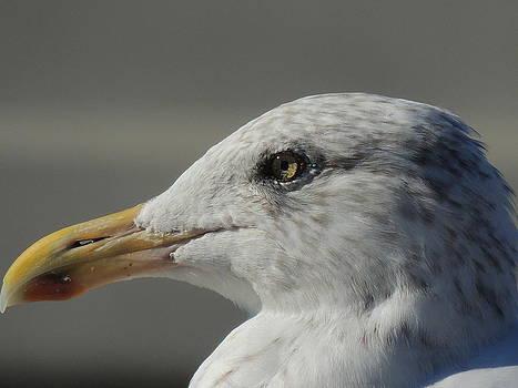 Anastasia Konn - A Seagull