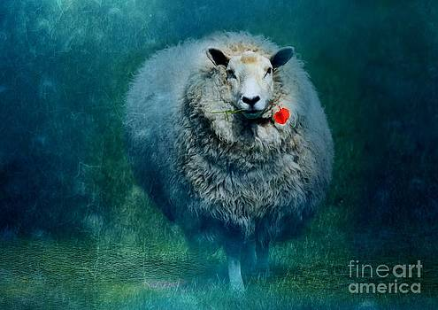 A sheep in love by Anne Seltmann