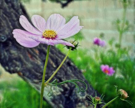Cindy Nunn - A Singular Beauty 2