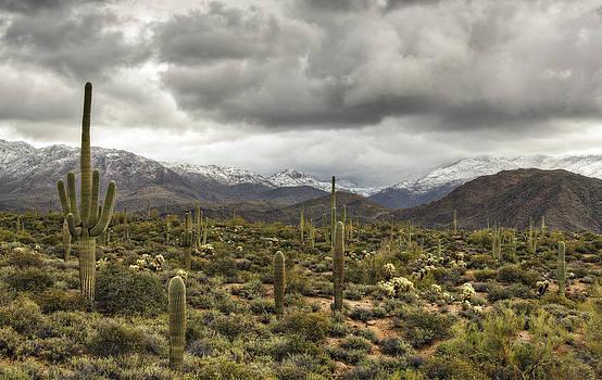 Saija  Lehtonen - A Snow Day in the Sonoran Desert