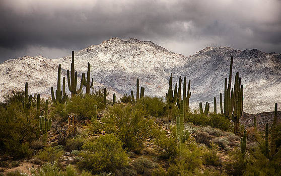 Saija  Lehtonen - A Snow Frosted Desert