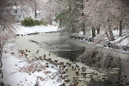 A Snowy Scene by Cathy Leite Photography