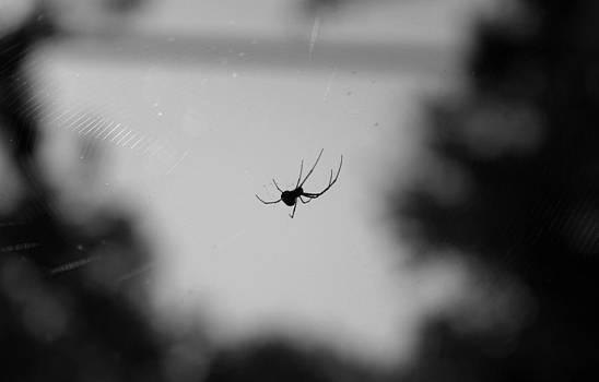 Robin Mahboeb - a spider