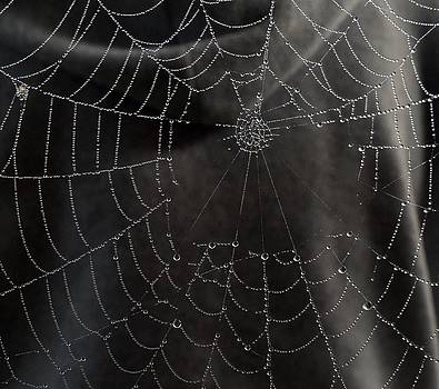 A Spiders Web by Michael Sokalski