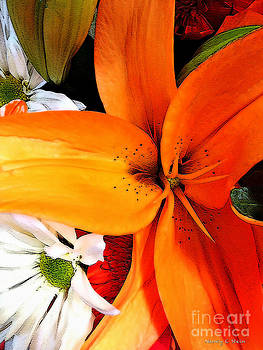 Nancy Stein - A Splash Of Orange