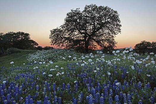 Susan Rovira - A Splendid Texas Sunset