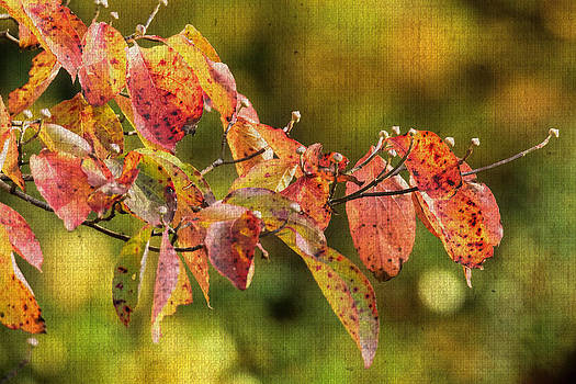Mother Nature - A Sprig of Autumn Dogwood