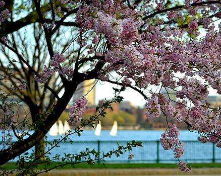 A spring day on the Charles River by Toby McGuire