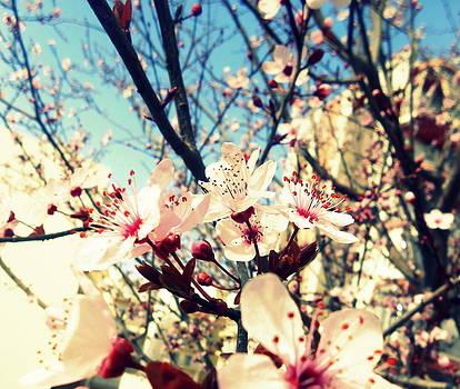 Ioanna Papanikolaou - a springtime breeze