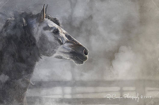 A Stallions Pride by Ryan Courson