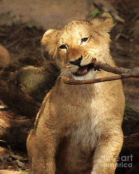 A Stick For Every Cub by Olivia Hardwicke