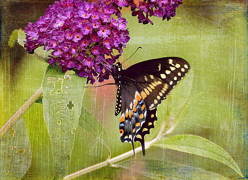 A Summer Pause by Michelle Ayn Potter