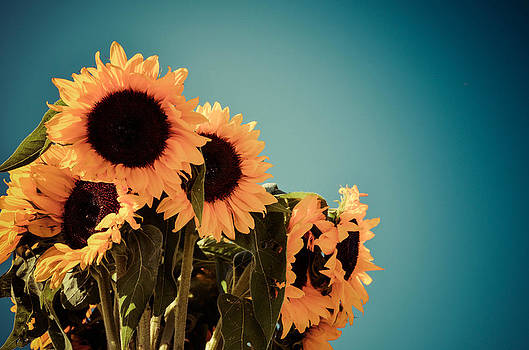 A Sunny Bunch by Betsy Armour