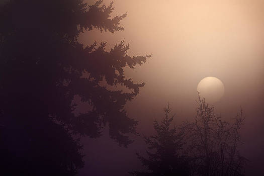 A Sunny Foggy Day in the Woods by Paul W Sharpe Aka Wizard of Wonders
