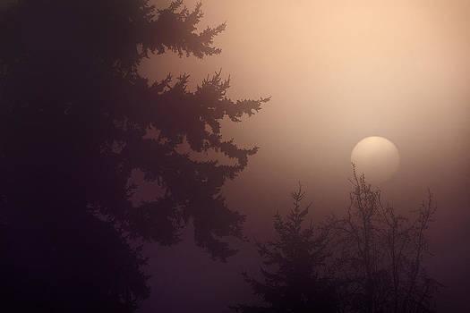 Paul W Sharpe Aka Wizard of Wonders - A Sunny Foggy Day in the Woods