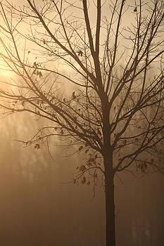 A Sunrise Moment by Karol Livote