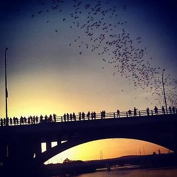 A Sunset and Hundreds Of Thousands Of Bats by Rebecca Kowalczik