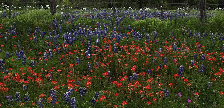 Susan Rovira - A Texas Roadside