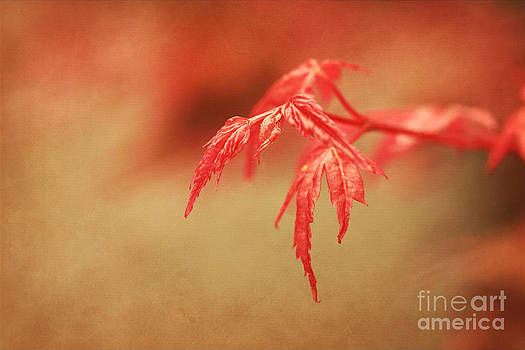 LHJB Photography - A touch of Autumn