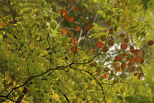 A Touch of Autumn by Jane Eleanor Nicholas
