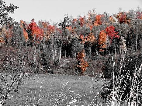 A Touch of Red by Jeanne LeMieux